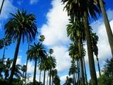 Palm Trees Lining Street Fotografie-Druck von Randy Faris