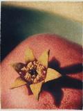 Pomegranate Photographic Print by Jennifer Kennard