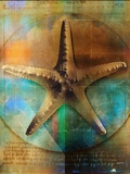 Starfish Photographic Print by Colin Anderson