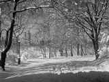Central Park en hiver, New York Reproduction photographique par  Bettmann