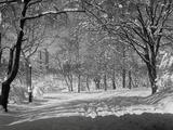 Central Park om vinteren Fotografisk trykk av  Bettmann