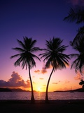 Twin Palms at Sunset Photographic Print by Bill Ross