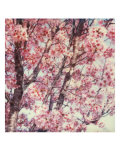Cherry Tree Giclee Print by Claire Rydell