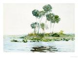 St. Johns River, Florida, 1890 Giclée-tryk af Winslow Homer