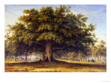 The Beggars Oak Giclee Print by John Glover