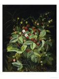 Wild Strawberries Giclée-tryk af Otto Diderich Ottesen
