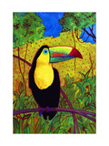 Toucan Giclee Print by John Newcomb