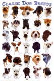 Races de chiens Affiches