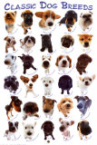 Dog Breeds Prints