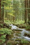 Bachlauf im Wald Poster