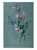 Honeysuckle Giclee Print by Pierre-Joseph Redouté