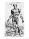 "Anatomical Study, Illustration from ""De Humani Corporis Fabrica"", 1543 Giclée-Premiumdruck von Andreas Vesalius"