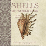 Shells of the World Posters by Paula Scaletta
