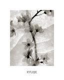 Cherry Blossoms in Winter Kunstdruck von  Ryuijie