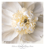 Peony Praise Posters by Rebecca Swanson