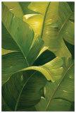Amazon Canopy Poster by  Verdi