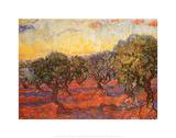黄色い空と輝く太陽のオリーブ林 1889年 ポスター : フィンセント・ファン・ゴッホ