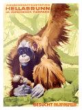 Munich Zoo, Ape Giclée-Druck