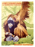 Munich Zoo, Ape Giclee Print