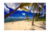 Palm Trees, Grand Cayman Island Fotografisk tryk af George Oze