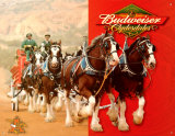Budweiser Clydesdales Metalen bord