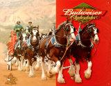 Budweiser Clydesdales Placa de lata
