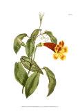 Fiery Florals III Poster von Samuel Curtis