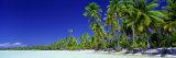 Beach with Palm Trees, Bora Bora, Tahiti Photographic Print by  Panoramic Images