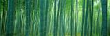 Bosque de bambú, Sagano, Kioto, Japón Reproducción de lámina sobre lienzo