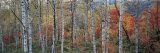 Fall Trees, Shinhodaka, Gifu, Japan Photographic Print by  Panoramic Images