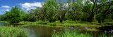 Jungle Gardens, Avery Island, Southern, Louisiana, USA Fotoprint