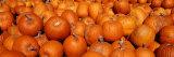 Close-up of Pumpkins Fotoprint