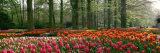 Keukenhof Garden, Lisse, the Netherlands Fotoprint van Panoramic Images,