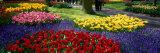 Keukenhof Garden, Lisse, the Netherlands Fotografisk trykk
