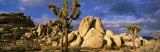Joshua Tree National Park, California, USA Fotografisk trykk av Panoramic Images,