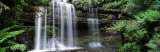 Rainforest, Mt. Field National Park, Tasmania, Australia Fotografisk trykk av Panoramic Images,