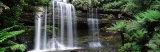 Rainforest, Mt. Field National Park, Tasmania, Australia Fotoprint van Panoramic Images,