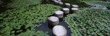 Water Lilies in a Pond, Helan Shrine, Kyoto, Japan Fotoprint van Panoramic Images,