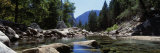 Mountain Behind Pine Trees, Tenaya Creek, Yosemite National Park, California, USA Photographic Print
