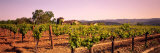 Sattui Winery, Napa Valley, California, USA Fotografisk trykk av Panoramic Images,