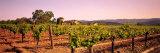 Sattui Winery, Napa Valley, California, USA Stretched Canvas Print