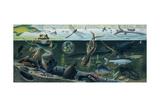 An Illustration of Freshwater Pond Life Reproduction procédé giclée par Ned M. Seidler