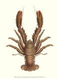 Antique Lobster II Plakater af James Sowerby