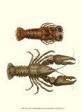 Antique Lobster III Plakat af James Sowerby