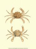 Antique Crab III Posters af James Sowerby