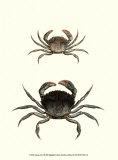 Antique Crab I Posters af James Sowerby