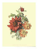 Lush Floral II Premium Giclee Print by Ernest-adolphe Guys
