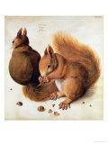 Squirrels, 1512 Reproduction procédé giclée par Albrecht Dürer