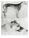 Greyhound and Head of a Greyhound Giclée-tryk af Antonio Pisani Pisanello
