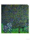 Roses Under the Trees, circa 1905 Giclée-tryk af Gustav Klimt